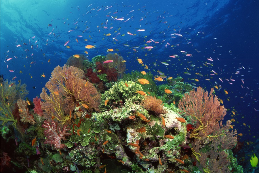 A coral reef hosts a variety of tropical fish.