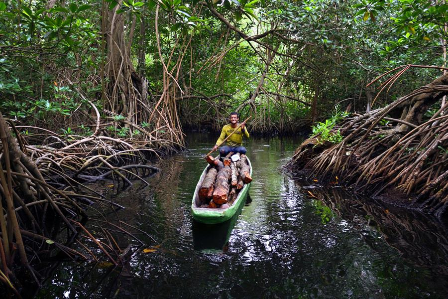 Man navigates a canoe through mangroves in Cisbata Bay, Colombia