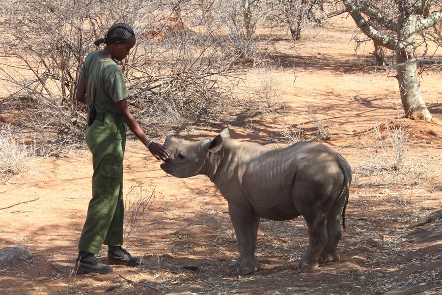 Loijipu, a rescued rhino at Reteti Elephant Sanctuary in Northern Kenya.