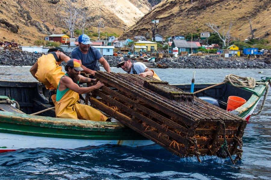 Fishermen hauling in a lobster trap in Chile