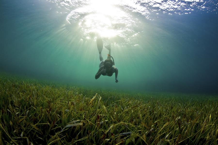 A young woman dives down to explore the seagrass bed in Honduras.
