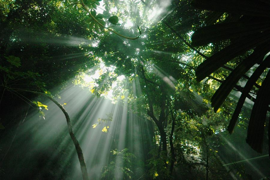 Jungle sunbeams