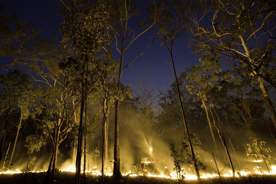 A brush fire in Australia