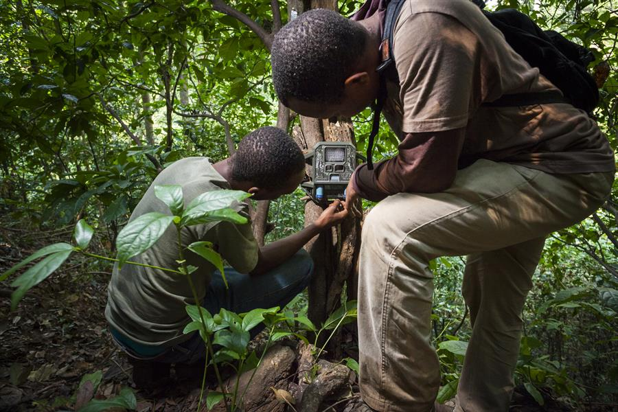 Two men set a camera trap in Tanzania.