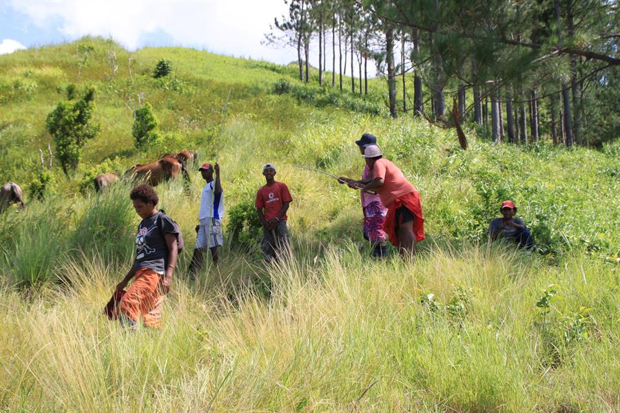 Community planting trees at the CI reforestation project near Vatukacevaceva village