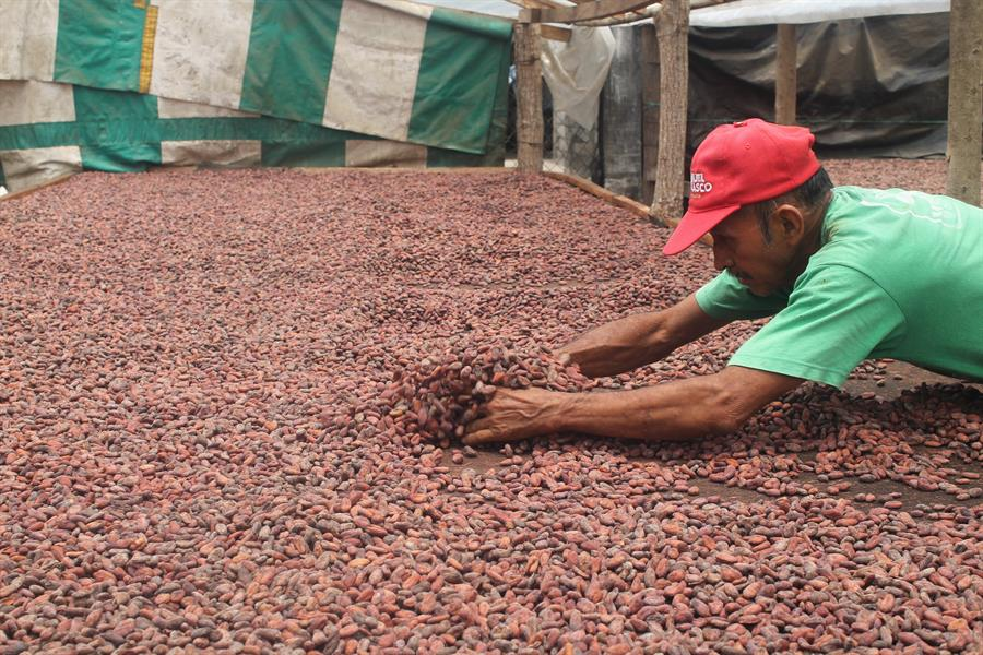 Cacao beans at the Rayen Cooperative in Tapachula, Mexico