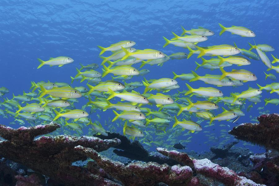 School of fish in the Phoenix Islands Protected Area