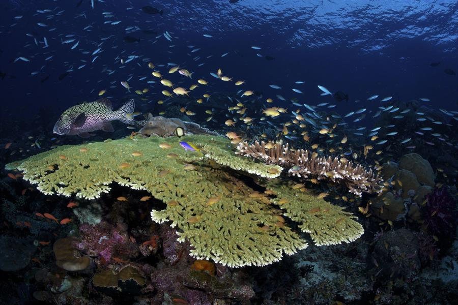 Coral reefs in Raja Ampat, a string of islands in Bird's Head, have remained resilient in the face of warming seas.