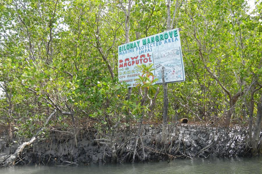 A protected mangrove forest in the Philippines