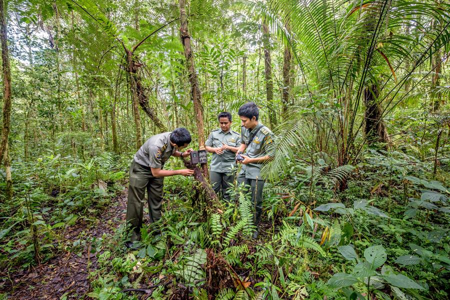 Park rangers check one of three camera traps they have set up in Batang Gadis National Park in Mandailing Natal, North Sumatra, to monitor wildlife.