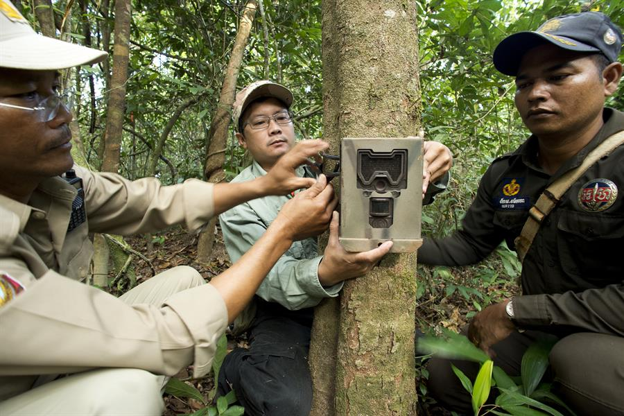 Rangers set up camera traps to record animal species within the Central Cardamom Protected Forest.