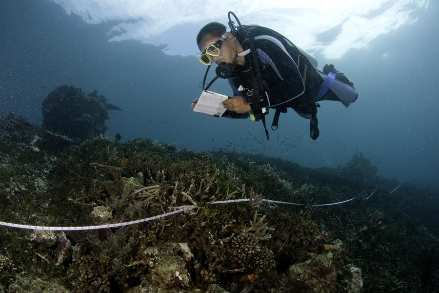 A scuba diver during a marine expedition to Halmahera, North Maluku Province, Indonesia.