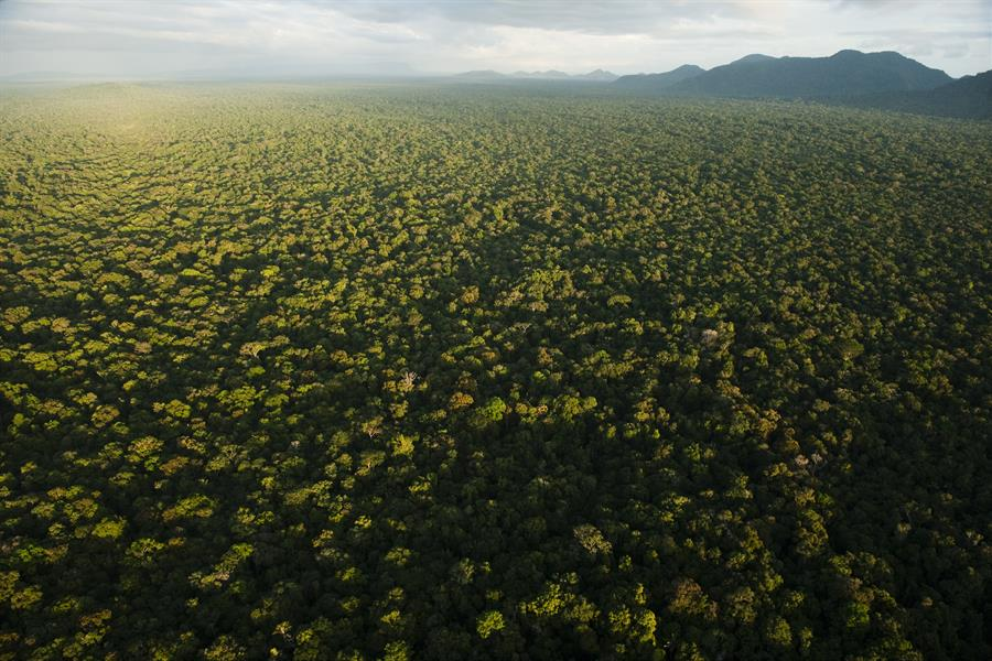 Aerial view of rainforest in the Iwokrama Reserve, Guyana, South America