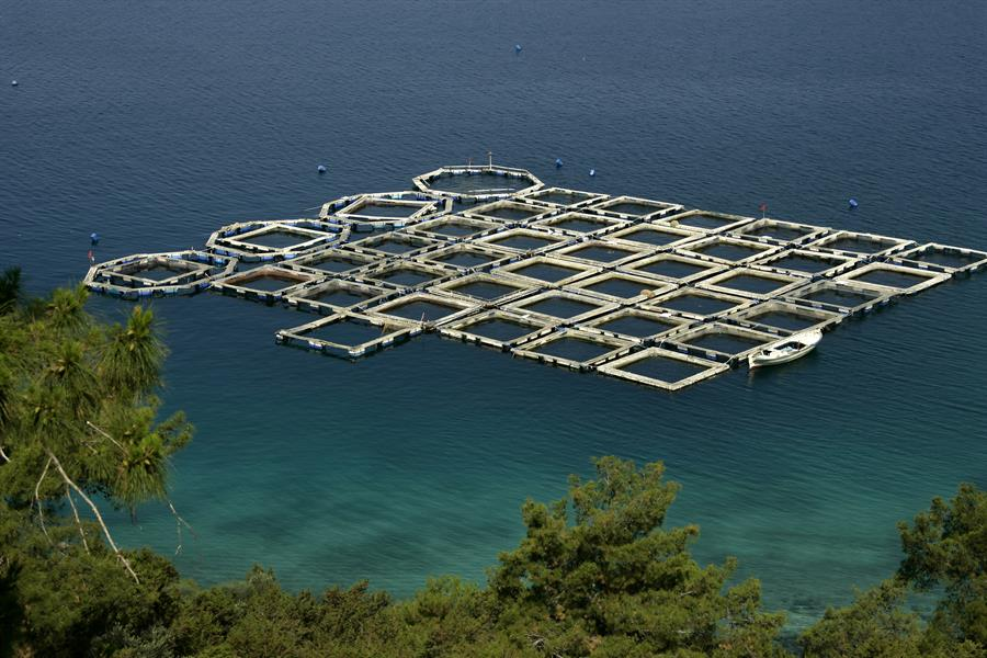 Elevated view of fish farm in Bodrum, Turkey