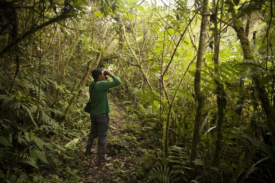 Parkranger in the Alto Mayo Protected Forest, Peru