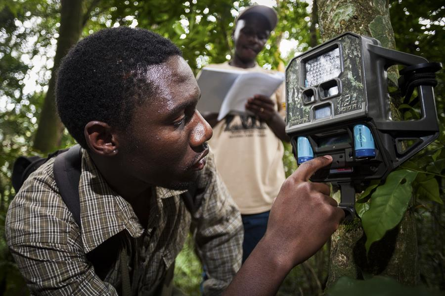 Researchers set up a camera trap in Kenya.