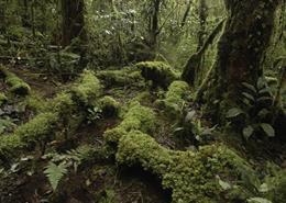 Forest floor in the Foya Mountains of Papua province, Indonesia