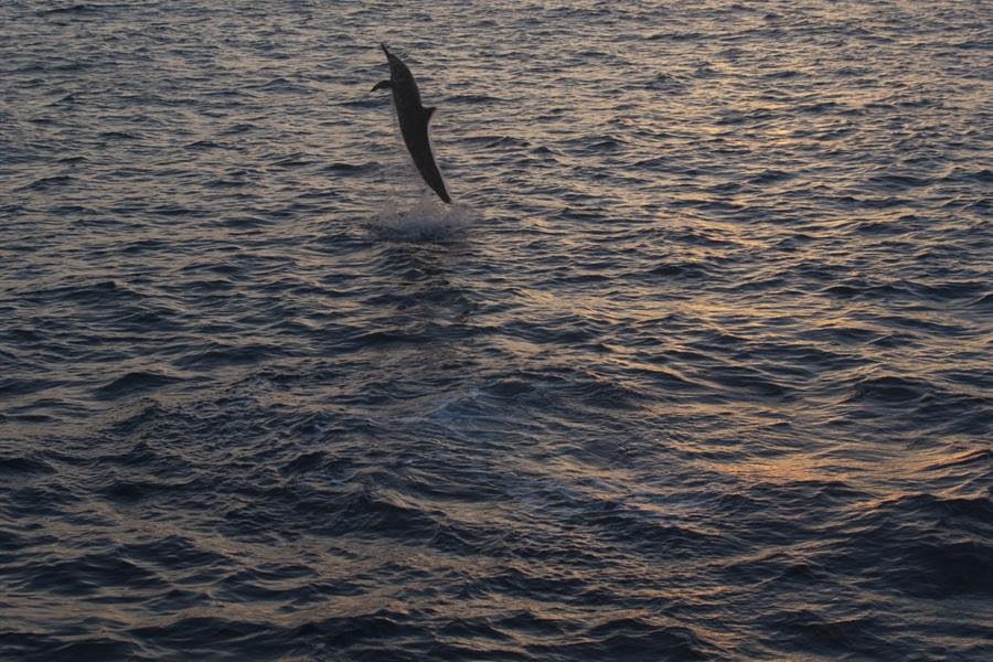 Dolphin jumping at sunset, Cocos Islands, Costa Rica
