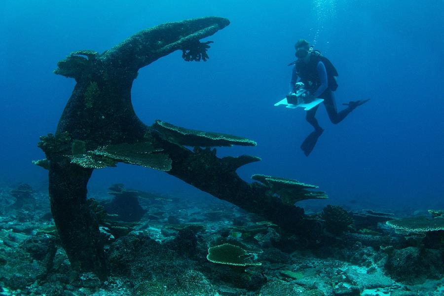 A diver views the wreckage of an old anchor in the waters of the Phoenix Islands Protected Area.