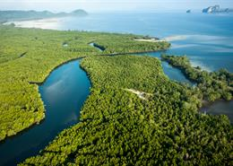 Aerial view of mangrove forest and open sea.