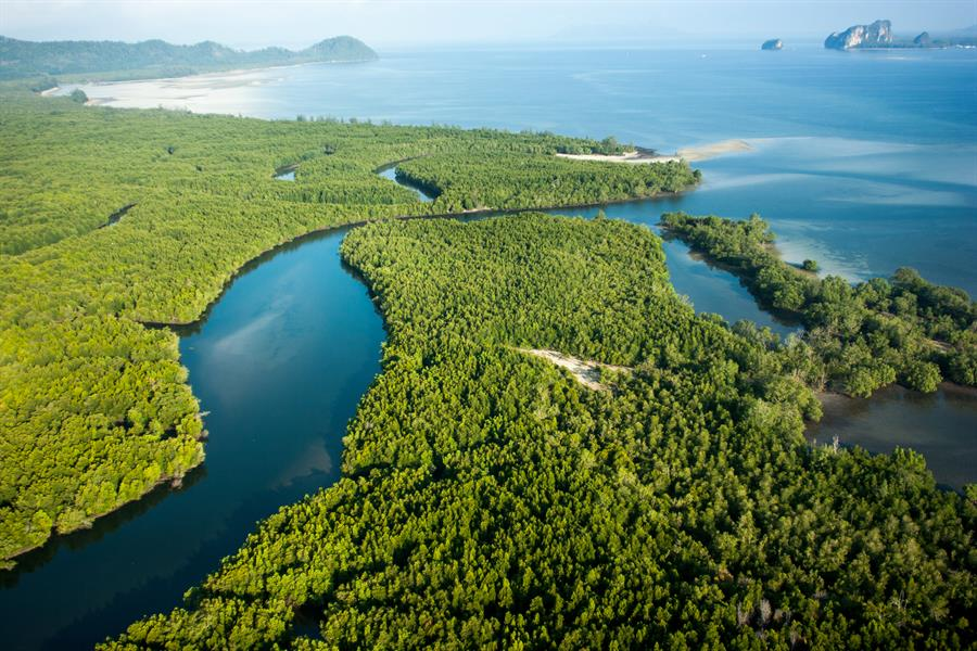 Aerial view of a mangrove forest in Thailand.