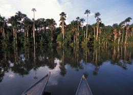 A view of the Amazon basin from the deck of a small boat.