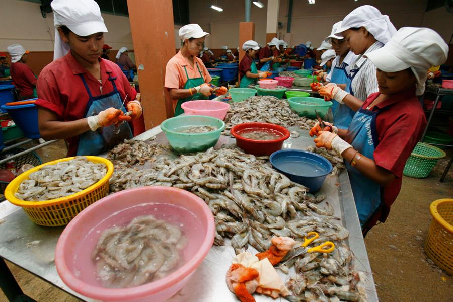 Migrant workers peel shrimp at a shrimp factory in Samut Sakhon on the outskirts of Bangkok on March 22, 2007.