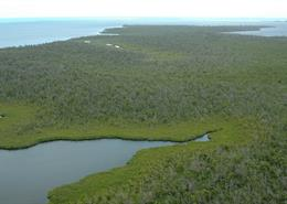 Aerial view of mangroves in the Grand Cayman islands