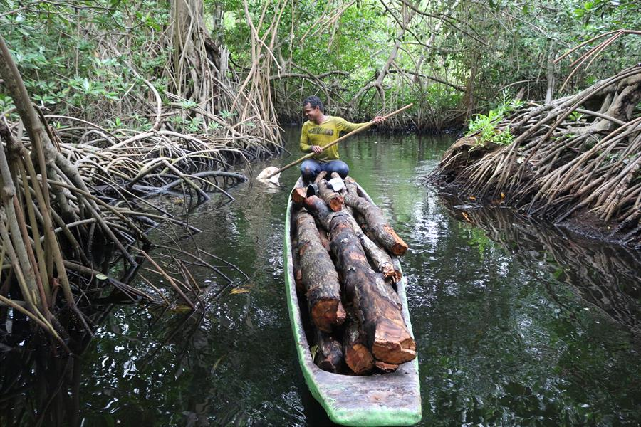 Man navigating a canoe through Cispata mangroves, Colombia