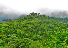 East Nimba Nature Reserve forest in Liberia