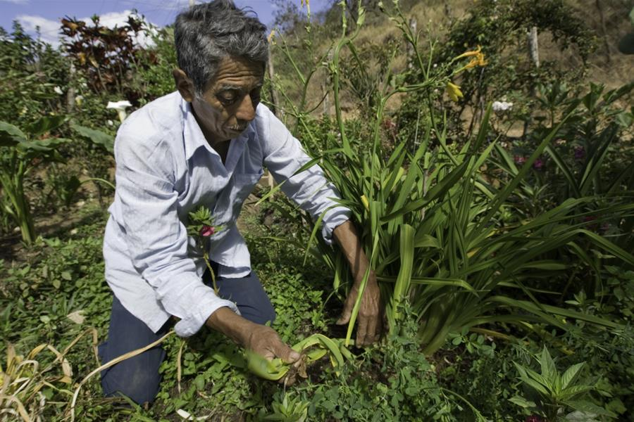 Man tends to crops in Chiapas, Mexico