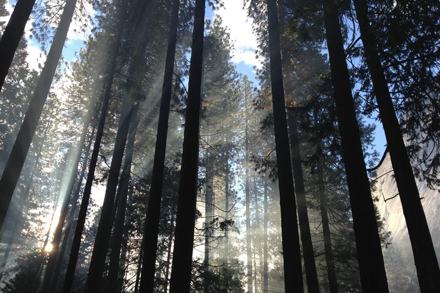 Light coming through the trees in Yosemite Valley.