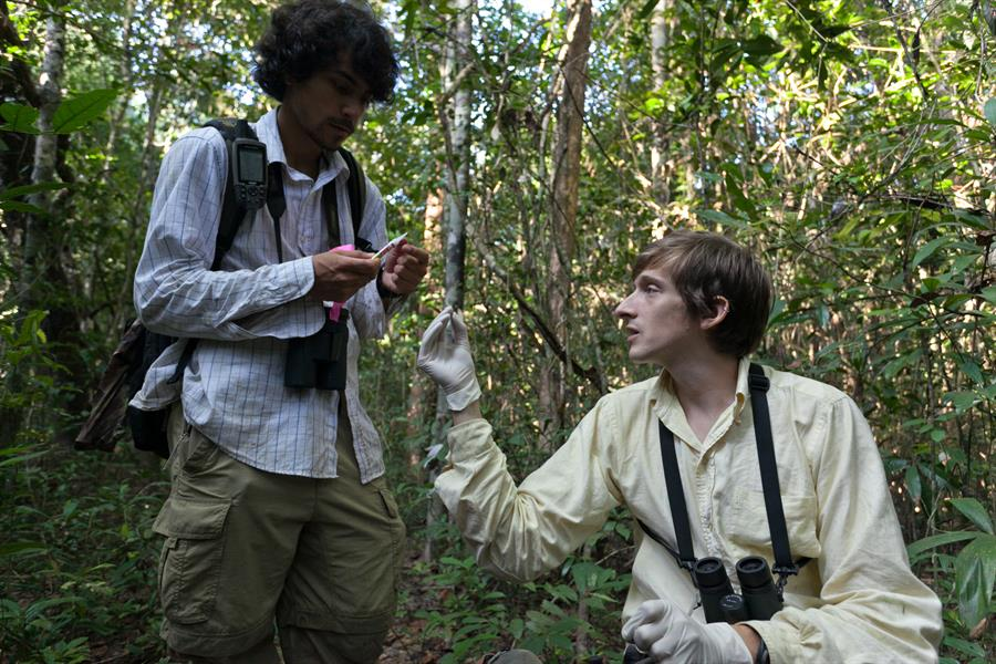 Researchers Santiago Cassalett and Jackson Frechette analyzing fruit seed dispersal in Veun Sai Conservation Area, Cambodia