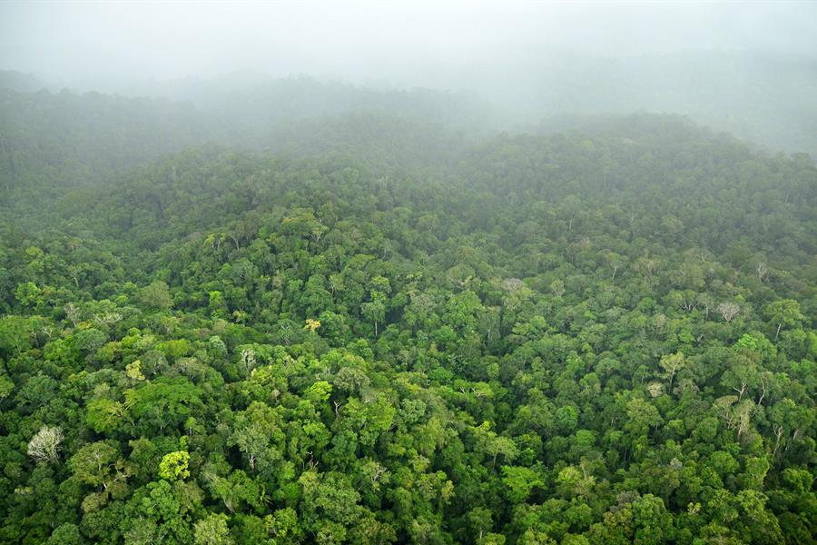 Aerial view of the forest on Gresngebergte Mountain, Suriname