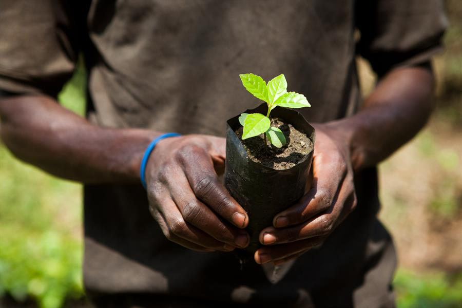 A man holds a seedling for reforestation in Tanzania.